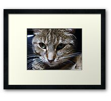 Dottie - My Computer Keyboard Kitty Framed Print