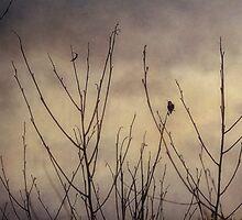 Hummingbird, Winter Solstice by kirsten116