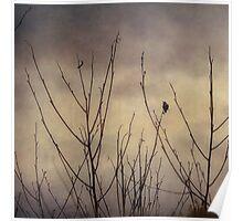 Hummingbird, Winter Solstice Poster