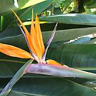 Bird Of Paradise by ScenerybyDesign