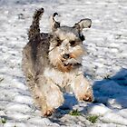 Having Fun in the Snow by Geoff Carpenter