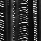 Stripes 1 by Werner Padarin