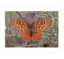 Spanish Fritillary butterfly Art Print
