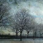 frozen tree alley by Sonia de Macedo-Stewart
