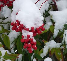Red berries under the snow by presbi