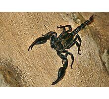 Scorpion Photographic Print