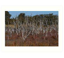 Mandurah 1 ~ Western Australia Art Print