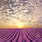 Sunset over a summer lavender field in Provence, France by Bruno Beach