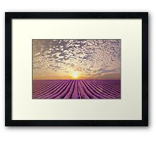 Sunset over a summer lavender field in Provence, France Framed Print