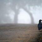 Morning Walk by Vivek Bakshi