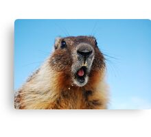 Marty the Marmot Canvas Print