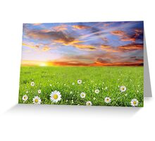 Margarite Field at Sunset in Bulgaria Greeting Card