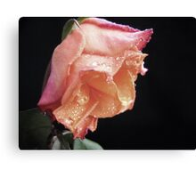 Faded Rose. Canvas Print
