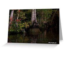 Waccamaw Cypress Swamp, South Carolina Greeting Card