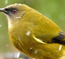 A Chilly Breeze - Bellbird NZ Sticker