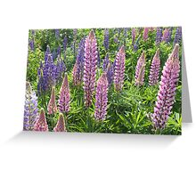 I'm Loopy For Lupins. Greeting Card