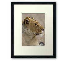 Lioness Profile Framed Print
