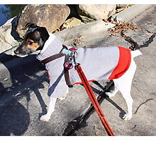 Martha Dogs Christmas Sweater Photographic Print