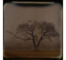 Foggy Morning TTV Photographic Print