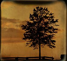 Amber Skies TTV by Tia Allor-Bailey