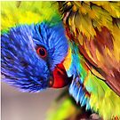 Round the Bend - Rainbow Lorikeet by Lesley Smitheringale