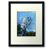 Branch of acacia Framed Print