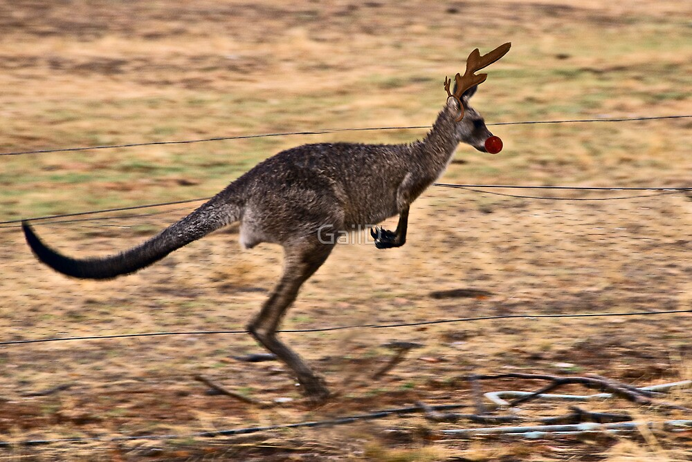 Rudolph the Red Nosed Kangaroo by GailD