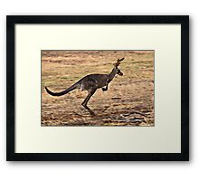 Rudolph the Red Nosed Kangaroo Framed Print