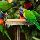 Rainbow Lorikeets by margotk