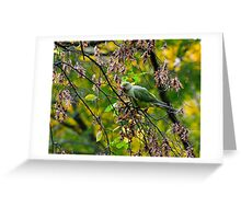 Rose Ringed Parakeet Greeting Card