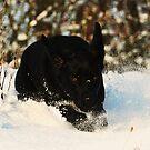Flying through the snow by Alan Mattison