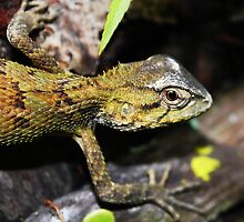 Tree Lizard Eye Close up by streetraven
