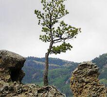 Die Hard Tree by Jimlhanson