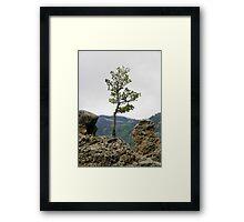 Die Hard Tree Framed Print