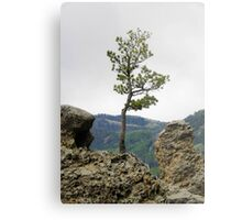 Die Hard Tree Metal Print