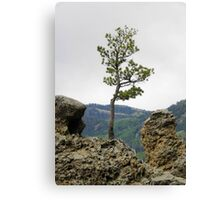 Die Hard Tree Canvas Print