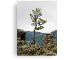 Die Hard Tree Canvas Print