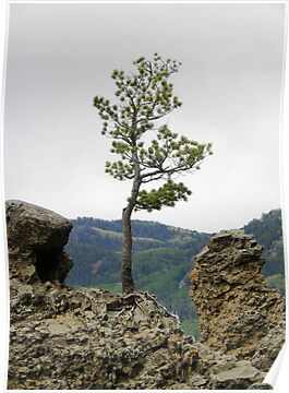Die Hard Tree by Jimlhanson