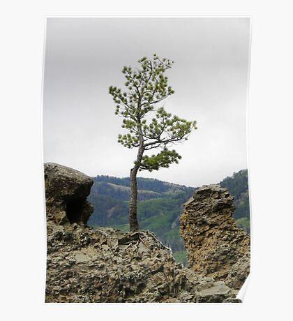 Die Hard Tree Poster