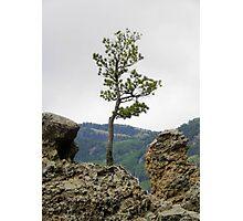 Die Hard Tree Photographic Print
