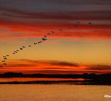 Rock Creek sunset - South Carolina by Elliot MacDonald