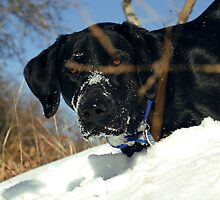 Maggie the Snowplow by Dennis Jones - CameraView