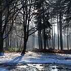 Winter in Stapleford Woods by Darren Peet
