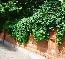 Stone wall of the old brick by vladromensky