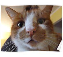 Sylvestre hopes everyone had a merry Catmas Poster