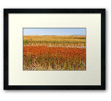 Colourful Grasses Framed Print