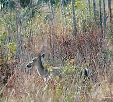 deer by RicoR8Art