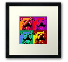Pit Bull Pop Art Framed Print