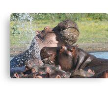 Hippo fight Canvas Print