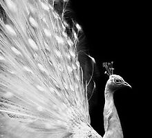 Peafowl portrait by Aleksandra Misic
